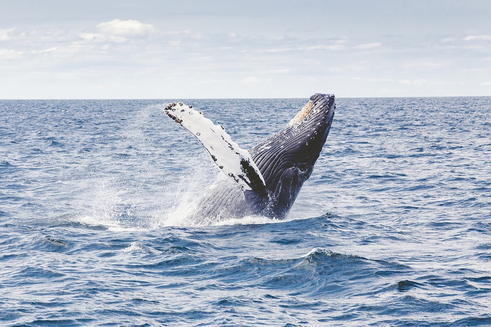 Whale Watching: dove e come osservare le balene