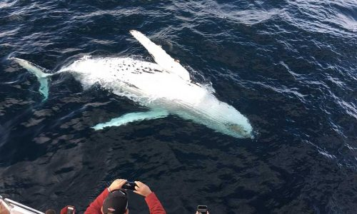 Whale-watching in Madagascar