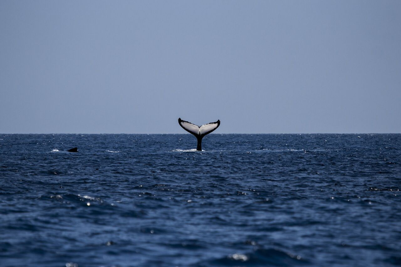 Whale watching e vacanza sub alle Canarie