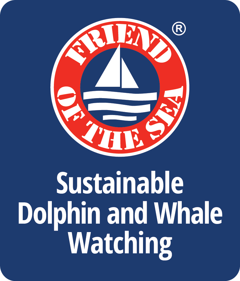 Dolphin e Whale Watching sostenibili